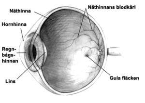 gula fläcken i ögat