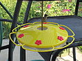Humming Bird at Yellow Perky-Pet® Oasis Feeder.JPG