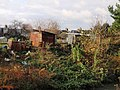 Huts, Havelock Allotments - geograph.org.uk - 1603259.jpg