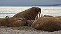 I am the Walrus 20130804 214514.jpg