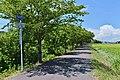 Ibaraki prefectural road route 505 (Sakuragawa-Tsuchiura-Itako Cycling road line) in Hojo,Tsukuba city.jpg