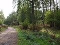 In Bere Wood - geograph.org.uk - 568801.jpg