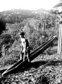 Indian slår på kanotformad trumma. Jfr. 4045. Erh, Från Erland Nordenskiöld 1928. Chocó. Colombia - SMVK - 004046.tif