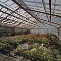 Interieur bloemenkas - Aalsmeer - 20404709 - RCE.jpg