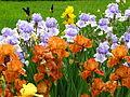 Irises in the Botanical Garden 04.JPG