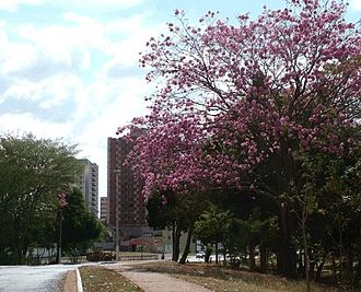 Itumbiara - Scene of Itumbiara.