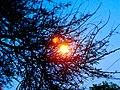 JNU Bulb behind trees.jpg