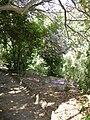 Jardín canario 15.JPG