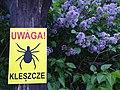 Jaroslawiec in Wielkopolski National Park (2).jpg