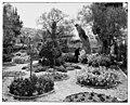 Jerusalem (El-Kouds). Old olive tree in Garden of Gethsemane LOC matpc.06701.jpg