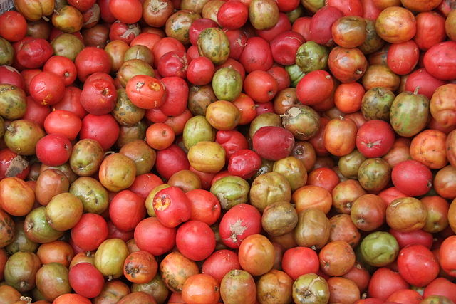 jocote (fruta)