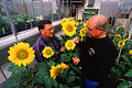 K8084-1sunflowerscientists.jpg