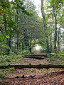 Kaapse bossen, bospad (1).jpg