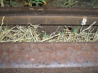 Reuse - Ants, being social insects, have been able to reuse rail tracks abandoned by humans for their own transportation. (Kadina, South Australia)