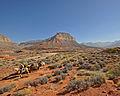 Kanab Creek Wilderness (8101136966).jpg