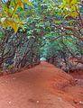 Kasturba Rd, Matheran, Maharashtra 410102, India - panoramio (11).jpg