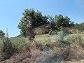 Kepi i Rodonit,Gjiri i Lalezit - Durres Albania 27.jpg