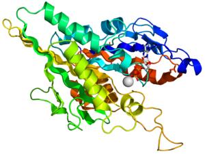 Kinesin - Image: Kinesin motor domain 1BG2