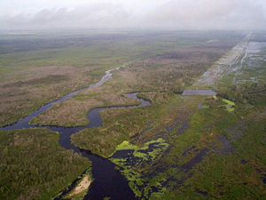 A color photograph taken from the air of a portion of the Kissimmee River; visible is the outline of the C-38 canal, filled with water and grass as the natural bends of the river grow through the canal