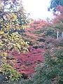 Kiyomizu-dera National Treasure World heritage Kyoto 国宝・世界遺産 清水寺 京都28.JPG
