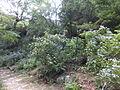 Kobe Municipal Arboretum in 2013-6-22 No,65.JPG