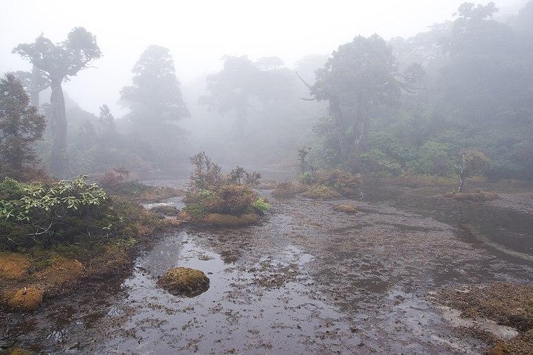 Kohananoego Wetland 07