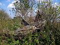 Krasnostav Vol-Volynskyi Volynska-windmill destroyed-1.jpg