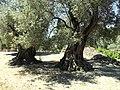 Kreta-Gortys09.jpg