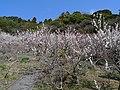 Kunō plum-grove park 01.jpg