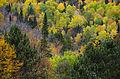 L'automne au Québec (8072561332).jpg