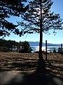 Lake Tahoe, NV, Zephyr Cove, Tree Silhouette 8-2010 (5758856323).jpg