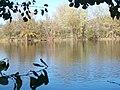 Lambert Lake - panoramio (9).jpg