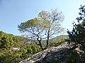Landschaft bei Parthenonas.jpg