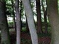 Landschaftsschutzgebiet Warmenau-Ufer LSG OS 00019 Datei 17.jpg