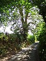 Lane by Reeves Farm - geograph.org.uk - 234322.jpg