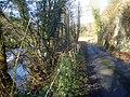 Lane to Ballsgate Common - 2 - geograph.org.uk - 1176687.jpg