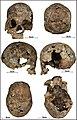 Lapa do Santo - Sepultamento 11 - Cranio.jpg