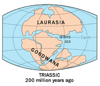 Evidence suggests that Australia was a part of...