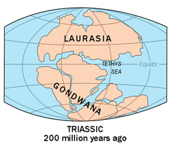 Map Of Australia 50 Million Years Ago.Timeline