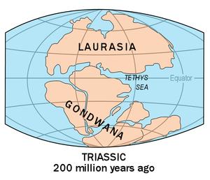 Pangaea is gevrom deur die saamsmelting van twee kontinente, laurasia