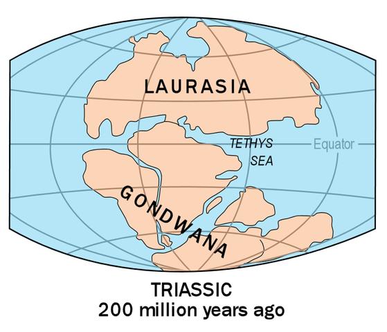 http://upload.wikimedia.org/wikipedia/commons/thumb/e/e5/Laurasia-Gondwana.png/559px-Laurasia-Gondwana.png