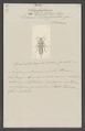 Leïstotrophus - Print - Iconographia Zoologica - Special Collections University of Amsterdam - UBAINV0274 014 14 0036.tif