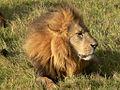 León-Kenia.jpg