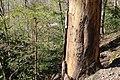 Leitenwälder der Isar 0630.jpg
