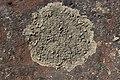 Lichen (27654879327).jpg