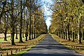 Limetree Avenue, Clumber Park - geograph.org.uk - 1052852.jpg