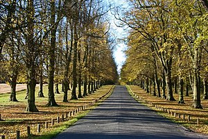 Clumber Park - Image: Limetree Avenue, Clumber Park geograph.org.uk 1052852