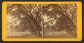 Live Oak Avenue, Bonaventure Cemetery, Savannah, Ga, from Robert N. Dennis collection of stereoscopic views 2.png