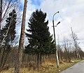Lobnya, Moscow Oblast, Russia - panoramio (450).jpg