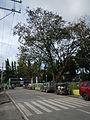 Lobo,Batangasjf9902 29.JPG